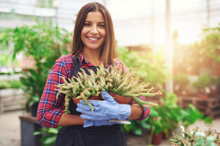 woman shop: Attractive successful nursery owner in her greenhouse holding a potted plant in her hands as she gives the camera a friendly smile, golden glow from the sun Stock Photo