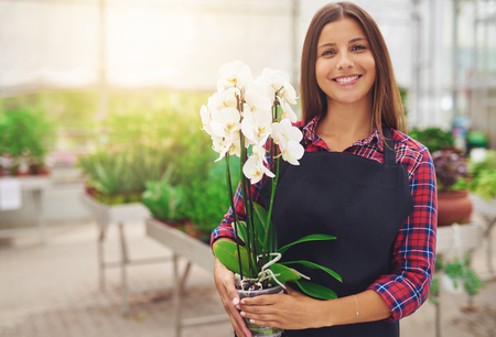 Smiling happy young florist in her nursery standing holding a potted white Phalaenopsis orchid plant in her hands as she tends to the houseplants in the greenhouse Foto de archivo