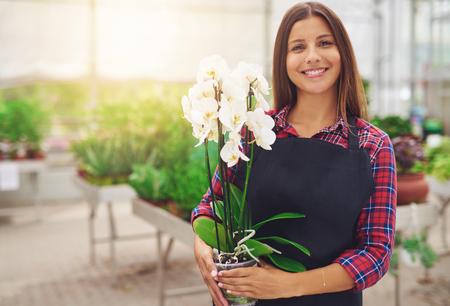 invernadero: Sonriendo florister�a joven feliz en su cuarto de ni�os de pie con una planta de orqu�dea Phalaenopsis blanco en maceta en sus manos ya que tiende a las plantas de interior en el invernadero