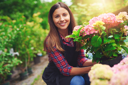 Smiling happy woman displaying a pink hydrangea plant that she has selected from amongst the plants on display at a nursery as she crouches amongst the potted houseplants