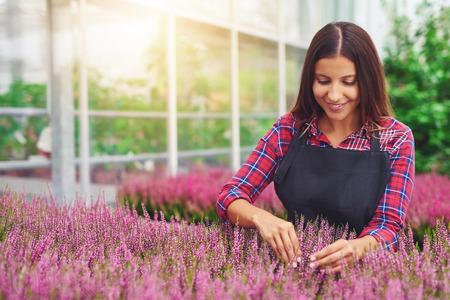 garderie: Succès jeune femme entrepreneur travaillant dans une serre tendant plantes dans sa pépinière comme elle les cultive à vendre