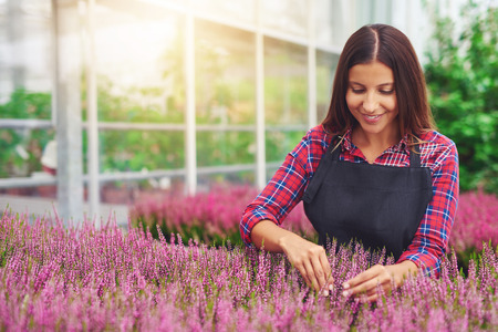 flower nursery: Successful young woman entrepreneur working in a greenhouse tending plants in her nursery as she cultivates them for sale Stock Photo