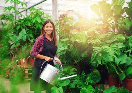 Young woman watering Delicious Monster plants for sale in a nursery greenhouse turning to smile at the camera , glowing morning sun in the background
