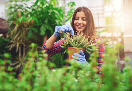 Smiling young entrepreneur in her nursery working in the greenhouse tending to the potted plants for sale with a glowing sun backdrop Stock Photo