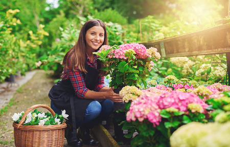 floriculture: Happy young gardener selecting hydrangea plants for her garden from the stock at a commercial nursery smiling as she displays her choice to the camera