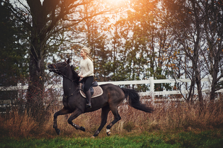 Young woman in riding gear galloping her chestnut horse through a rural field in autumn
