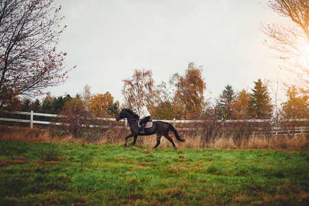 Young woman in riding gear galloping her chestnut horse alone through a countryside pasture in autumn Stock Photo