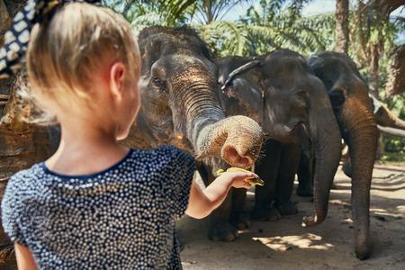 Cute little girl feeding a group of Asian elephants bananas at an animal sanctuary in Thailand