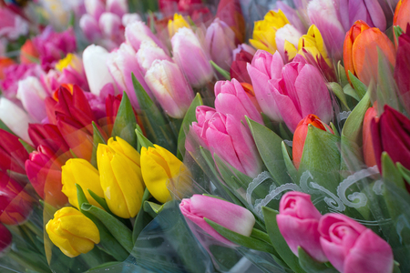 Floral Background Of Colorful Tulips Wallpaper Design Stock Photo