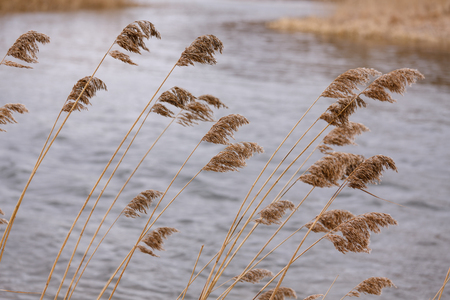 full height: Brown - blue background diagonally. Growing over the water, reed, cane. Natural background. Photos for your design. Stock Photo