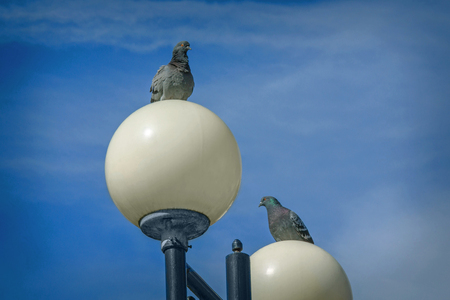 Two doves sitting on lampposts. Beautiful picture with the birds in the sky. Wallpaper Reklamní fotografie