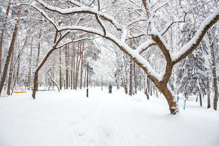 Snowstorm in the city Park. The trees are covered with snow and have strange shapes. Woman with pram in winter Park during a snowfall. Stock Photo
