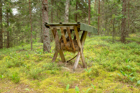 A feeding trough for animals in the coniferous forest. Feeder for wild animals in the dreams. The method of bait animals by hunters - installation of feeders in the forest.