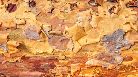 Pine tree bark background. Reklamní fotografie