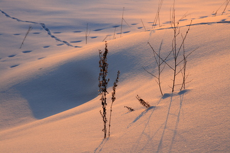 Winter landscape with beautiful shadows. Sparkling snow in the setting sun. Snow drifts, traces of various animals in the snow. Suitable for any design. Standard-Bild - 114892215
