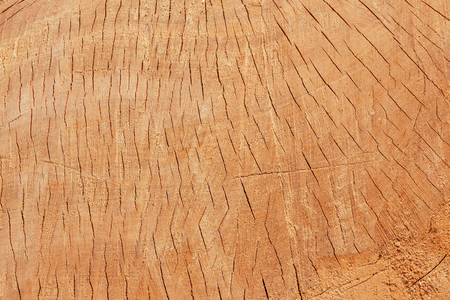 The texture of freshly cut wood. Annual rings and cracks in the old tree. Horizontal seamless wooden background. Texture in high resolution. Color image.