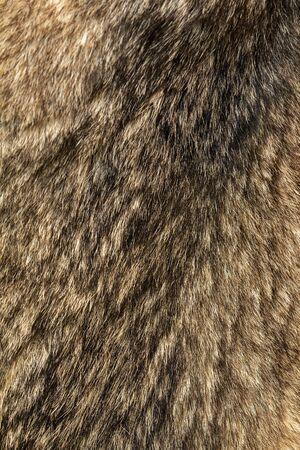Wolfskin as background and texture. Trophy wolf skin. Wild animal fur. Texture of wolf fur.