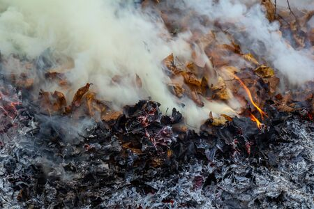There are fallen autumn leaves burning in the fire. Flames and blue smoke from burning leaves. Horizontal background, selective focus.