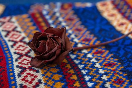 A dried red rose lying on a warm hand-knitted scarf. Cozy winter background: knitted muffler and lying on it rose. Copy space. Selective focus. Stok Fotoğraf