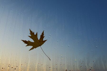 There is an autumn yellow maple leaf that has fallen from the tree and stuck to the wet glass. Autumn background with maple leaf on wet window at sunset.