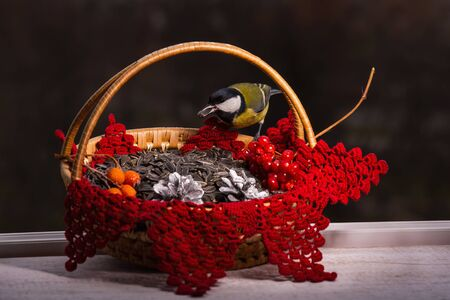 A tit sits on a bird feeder in the form of a basket on a dark blurred background. Beautiful bright picture with a bird. Care for birds in winter. Festive Christmas photo. Studio photography.