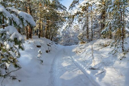 there is a snow covered road in the winter pine forest. this is a winter forest after a snowstorm in Sunny weather. beautiful snow covered pine trees and high snow drifts. Stok Fotoğraf