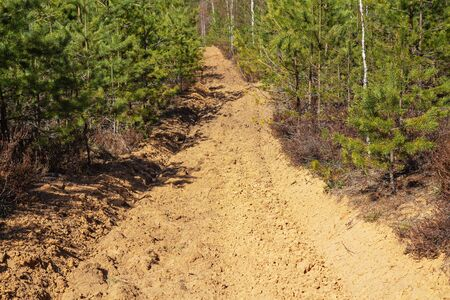 In spring pine forest there is a plot of ploughed land serving to protect the forest from fire.