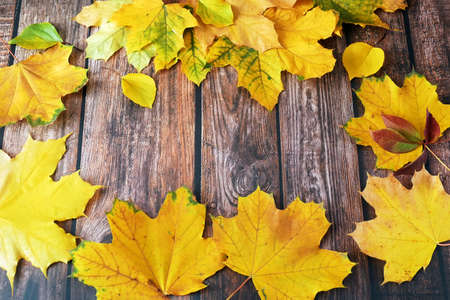 autumn leaves on wooden background frame, with copy space, Autumn Leaves over a Natural Dark Wooden background.