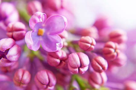 Beautiful lilac flowers bunch background