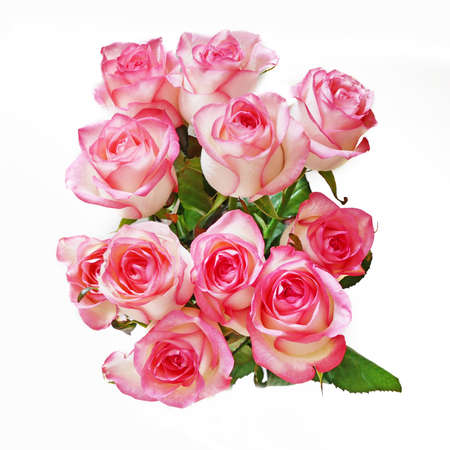 Beautiful pink roses bunch on white background, closeup