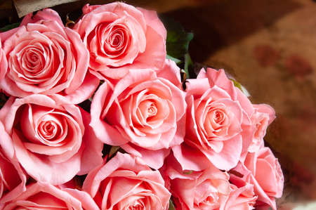 Beautiful pink roses bunch isolated on white background, closeup