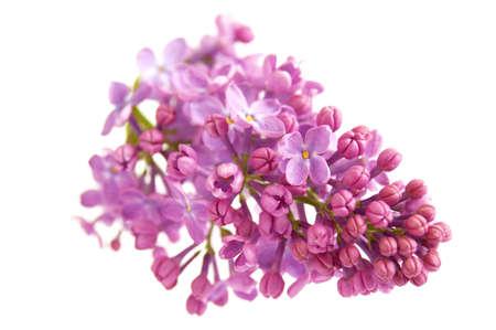 Beautiful violet lilac flowers background, closeup 版權商用圖片