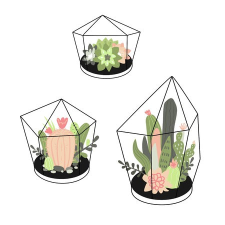 Vector set with cute cactuses and succulents in terrariums. Illustration with home plants in scandinavian style.