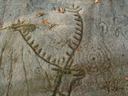 third age: Petroglyph  Detail of the main reason for the panel called two Carballos Laxe  The main reason is a great deer hunted with several spears stuck into its side  Dating in the transition from third and second millennium BC During the Bronze Age  Editorial