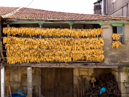 drying corn cobs: Corn cobs to dry in a traditional balcony in Cenlle  O Ribeiro, Galicia, Spain