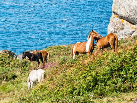 Horses in Udra Cape - Bueu - Galicia in the northwest of Spain. Europe Stock Photo