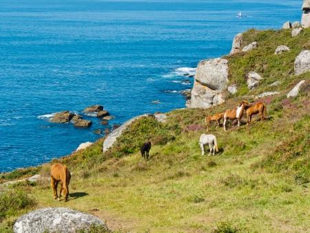 galicia: Horses in Udra Cape - Bueu - Galicia in the northwest of Spain  Europe