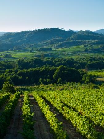 galicia: O Ribeiro - Avia valley  Forest and vineyards