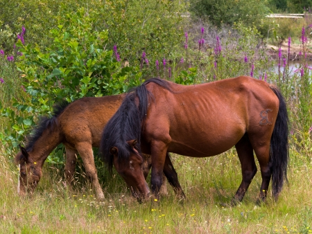 two horses free, the mother and calf Stock Photo - 15681378