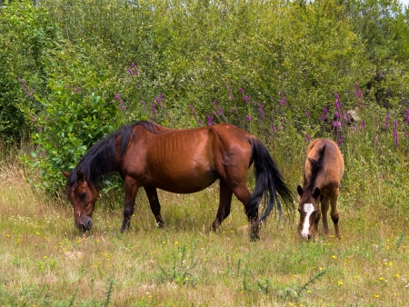 two horses free, the mother and calf Stock Photo