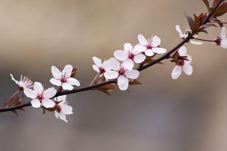 Frühling blüht