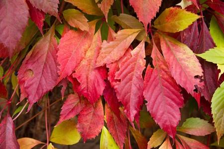 Bunt Herbst leafs