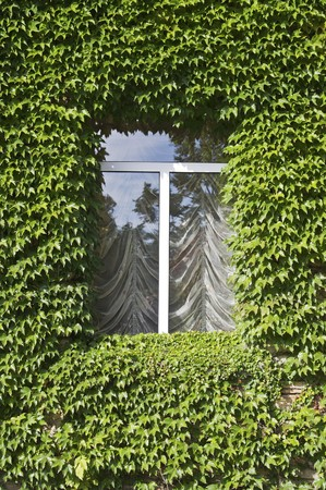 Fenster mit Efeu leafs over it