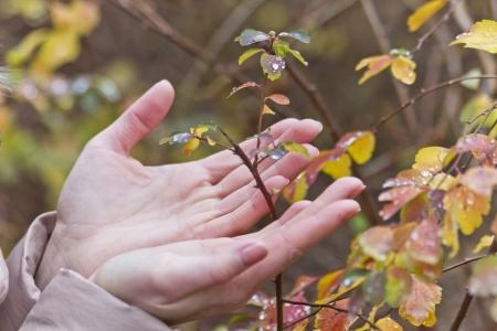 hands, plant photo