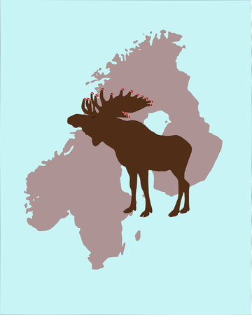 scandinavia: Moose with christmas caps on its antlers in Scandinavia