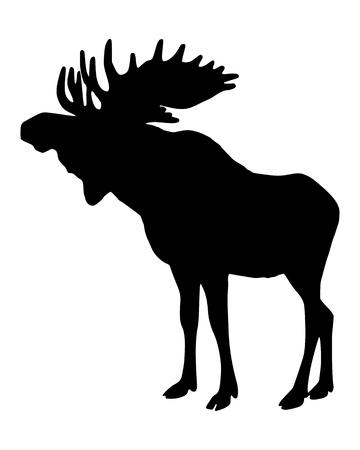 antlers: Moose