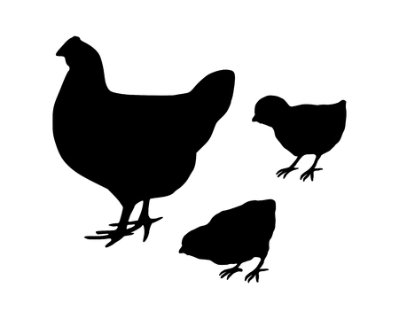 omnivore: Hen and chicks Illustration