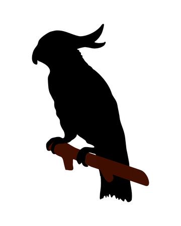 perico: La silueta de un negro sobre blanco, cacat�a