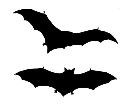 bat animal: The black silhouette of two bats flying