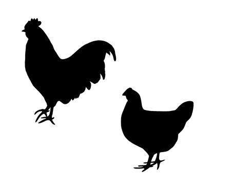 omnivore: Cock and hen Illustration
